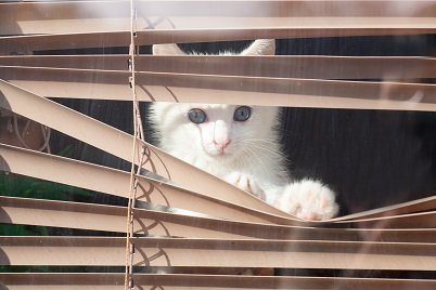 Cat confined