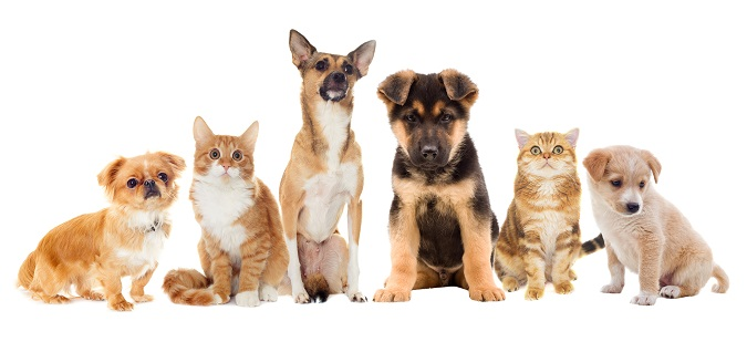 dogs and cats on white background