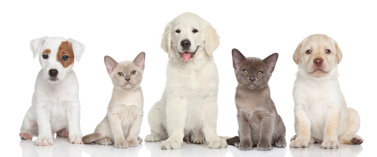 cats and dogs on white background